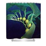 Giant Kelp Detail Shower Curtain