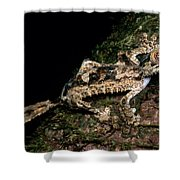 Giant Leaf Tail Gecko Shower Curtain