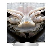 Giant Marine Isopod Shower Curtain