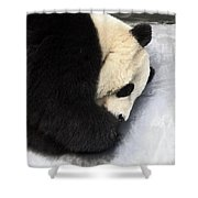 Giant Panda Portrait Shower Curtain