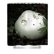 Giant Puffball Shower Curtain