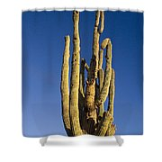 Giant Saguaro Cactus Portrait With Blue Sky Shower Curtain