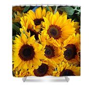 Giant Sunflowers For Sale In The Swiss City Of Lucerne Shower Curtain