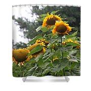 Giant Sunflowers Shower Curtain