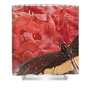 Giant Swallowtail - 3 Shower Curtain