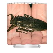 Giant Water Bug Shower Curtain