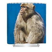 Gibraltar Barbary Macaque Macaca Shower Curtain