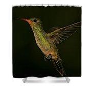 Gilded Hummingbird In Flight Shower Curtain