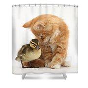 Ginger Kitten And Mallard Duckling Shower Curtain