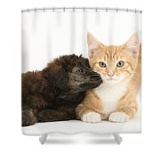 Ginger Kitten And Toy Poodle Shower Curtain