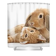 Ginger Kitten Lying With Sandy Lionhead Shower Curtain