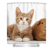 Ginger Kitten With Red Guinea Pig Shower Curtain