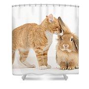 Ginger Kitten With Sandy Lionhead Rabbit Shower Curtain