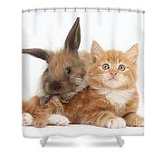 Ginger Kitten Young Lionhead-lop Rabbit Shower Curtain
