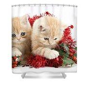 Ginger Kittens Shower Curtain