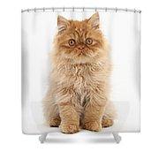 Ginger Persian Kitten Shower Curtain