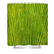 Ginko Tree Leaf Shower Curtain