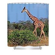 Giraffe Against Blue Sky Shower Curtain