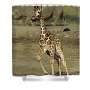 Giraffe Giraffa Camelopardalis Juvenile Shower Curtain
