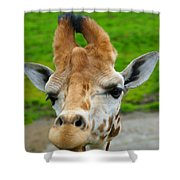 Giraffe In The Park Shower Curtain