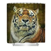 Give Me Your Tender Look Shower Curtain