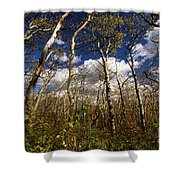 Glacier Aspens Shower Curtain
