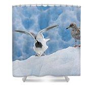 Glaucous-winged Gull Larus Glaucescens Shower Curtain