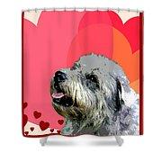 Glen Of Imaal Terrier Shower Curtain
