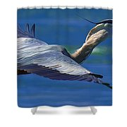 Gliding Great Blue Heron Shower Curtain