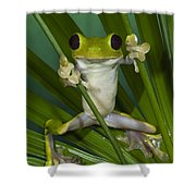Gliding Leaf Frog Agalychnis Spurrelli Shower Curtain