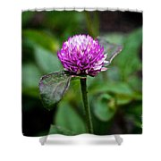 Globe Amaranth Bicolor Rose Shower Curtain
