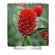 Globe Amaranth Shower Curtain