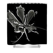 Glorios Superba In Black And White Shower Curtain