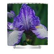 Glorious Iris Shower Curtain