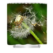 Glowing Dandelion Spores Shower Curtain