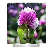 Glowing Globe Amaranth Shower Curtain