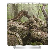 Gnarly Old Tree In Fog Along The Blue Ridge Parkway Shower Curtain by Bill Swindaman