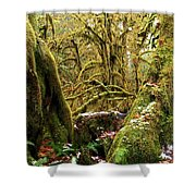 Gnomes In The Rainforest Shower Curtain
