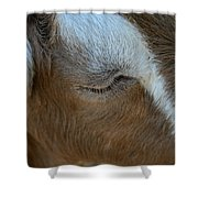 Goat Dreams Shower Curtain