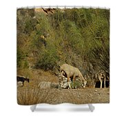 Goat Meeting In Spain Shower Curtain