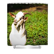 Goat Smiles Shower Curtain