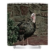 Gobble Time Shower Curtain