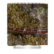 Goby On Coral, Australia Shower Curtain