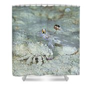 Goby With A Hermit Crab, Australia Shower Curtain