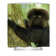 Goeldis Monkey Callimico Goeldii Shower Curtain