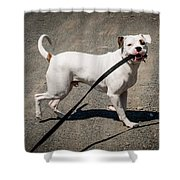 Going For A Walk Shower Curtain