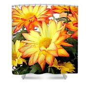 Gold And Red Autumn Mums Shower Curtain