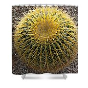 Gold Barrel Cactus   No 1 Shower Curtain