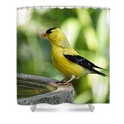 Gold Finch At The Bird Bath Shower Curtain
