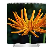 Gold Fingers Shower Curtain